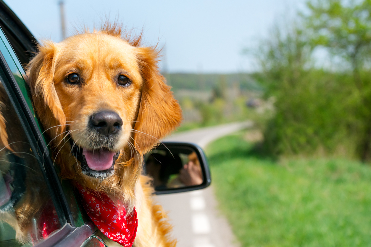 Keep your vehicle's interior spotless with a dog